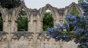 Las ruinas de la iglesia del ` s de St Mary en York, Reino Unido, con los árboles en el fondo y las flores azules del ceanothus e Fotografía de archivo