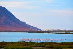 Las Salinas Cabo de Gata Almeria flamingos Spain Royalty Free Stock Images