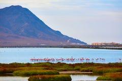Las Salinas Cabo de Gata Almeria flamingos Spain Stock Image