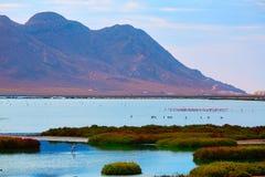 Las Salinas Cabo de Gata Almeria flamingos Spain. Las Salinas in Cabo de Gata Almeria flamingos lake in Spain Stock Image