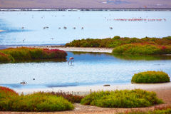 Las Salinas Cabo de Gata Almeria flamingos Spain Royalty Free Stock Images