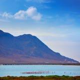 Las Salinas Cabo de Gata Almeria flamingos Spain Royalty Free Stock Image