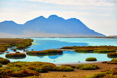 Las Salinas i Cabo de Gata Almeria Royaltyfri Fotografi