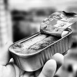 Las sardinas Fotografía de archivo