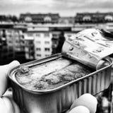 Las sardinas Imagenes de archivo