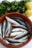 Las sardinas empanan y la vertical del tomate Fotografía de archivo libre de regalías