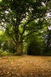 Las scena na początku jesieni obrazy stock