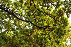 Las scena na początku jesieni zdjęcia stock