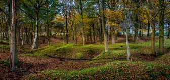 Las scena w lesie Zdjęcia Stock