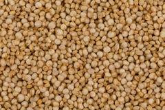 Las semillas de la quinoa se cierran para arriba Imagenes de archivo