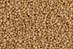 Las semillas de la quinoa se cierran para arriba Imagen de archivo