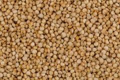 Las semillas de la quinoa se cierran para arriba Fotografía de archivo