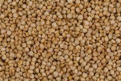 Las semillas de la quinoa se cierran para arriba Foto de archivo