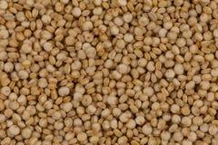 Las semillas de la quinoa se cierran para arriba Imágenes de archivo libres de regalías