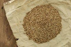 Las semillas del alforfón Imagen de archivo