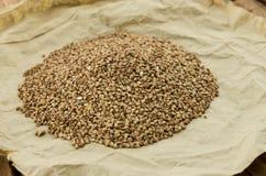 Las semillas del alforfón Imagenes de archivo