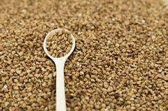Las semillas del alforfón Imagen de archivo libre de regalías