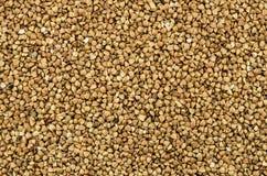 Las semillas del alforfón Foto de archivo libre de regalías