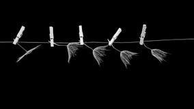 Las semillas del diente de león con las pinzas pequeñas, de madera del lavadero y enrarecen el alambre metálico Fotografía de archivo libre de regalías