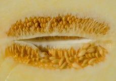 Las semillas del melón se cierran para arriba Fotografía de archivo libre de regalías