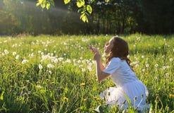 Las semillas que soplan adolescentes de un diente de león florecen en un parque de la primavera Fotos de archivo libres de regalías