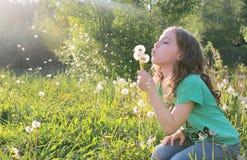 Las semillas que soplan adolescentes de un diente de león florecen en un parque de la primavera Imágenes de archivo libres de regalías