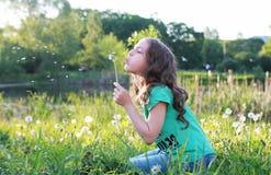 Las semillas que soplan adolescentes de un diente de león florecen en un parque de la primavera Fotografía de archivo
