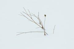 Las series plantan en la nieve fotos de archivo libres de regalías