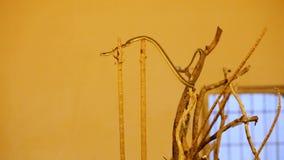 Las serpientes venenosas suben las ramas de un árbol en terrario almacen de metraje de vídeo