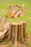 las się rozrasta fiszorka zieleni drzew Zdjęcia Stock