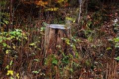 las się rozrasta fiszorka zieleni drzew obraz stock
