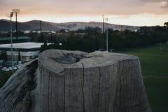 las się rozrasta fiszorka zieleni drzew Fotografia Stock