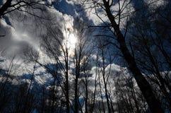 Las siluetas de árboles en primavera temprana iluminan los rayos del sol de detrás las nubes Paisaje hermoso del resorte E imagen de archivo