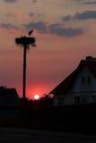 Las siluetas de la puesta del sol de las cigüeñas blancas emparejan tomar cuidado del descendiente futuro en jerarquía grande imagenes de archivo