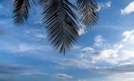 Las siluetas del fondo de la hoja del coco son el cielo Fotos de archivo libres de regalías