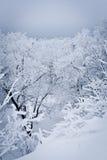 las snowed Zdjęcia Royalty Free