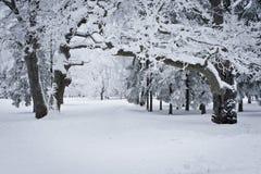 las snowed Zdjęcie Stock