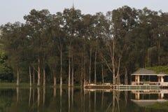 Las sombras de la tarde del árbol Foto de archivo libre de regalías