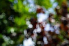 Las sombras de verde natural defocused y del rojo se van con whi brillante Imagen de archivo libre de regalías