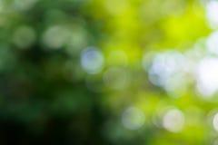 Las sombras del verde natural defocused hermoso se van con el li blanco Foto de archivo