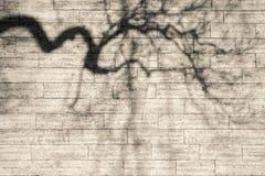 Las sombras doblaron ramas en una pared beige Fotografía de archivo libre de regalías