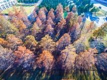 Las sombras largas de la puesta del sol aéreas sobre árboles del invierno broncean y cayendo sus filas de las hojas y filas Foto de archivo