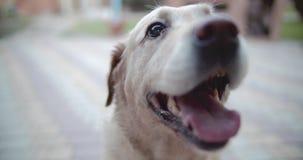 Las sonrisas del perro El perro está listo para jugar y está esperando al dueño almacen de video
