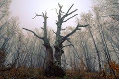 las tajemniczy Fotografia Royalty Free