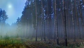 las tajemniczy Obrazy Stock