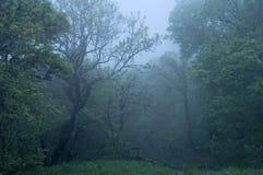 las tajemniczy Zdjęcia Royalty Free