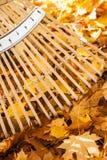 Las tareas de la yarda de la caída se dirigen mantenimiento de la propiedad con el rastrillo de bambú y las hojas de arce amarill Foto de archivo