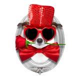 Las tarjetas del día de San Valentín persiguen en amor Imagenes de archivo