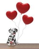 Las tarjetas del día de San Valentín persiguen llevar a cabo baloons del corazón Imagen de archivo libre de regalías