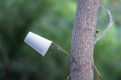 Las tazas blancas plásticas disponibles que cuelgan en la rama de un árbol, el fondo son un verano verde borroso fotografía de archivo